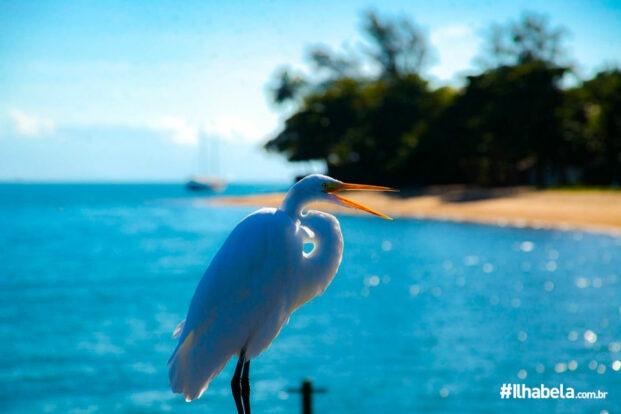 Garça no Píer da Praia do Engenho D'Água - Ilhabela