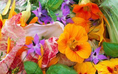 Flores: É prá ver ou pra comer?