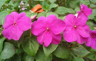 Terapias florais trazem de volta o equilíbrio e aliviam o stress