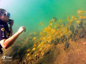 mergulho-em-ilhabela-ilha-divers-03