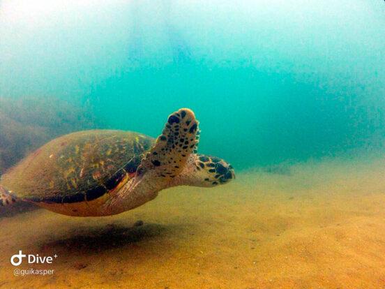 Mergulho em Ilhabela - Ilha Divers