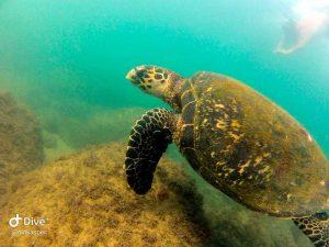 mergulho-em-ilhabela-ilha-divers-07
