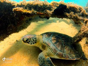 mergulho-em-ilhabela-ilha-divers-08