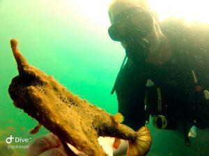 mergulho-em-ilhabela-ilha-divers-12