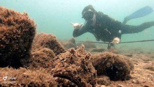 mergulho-em-ilhabela-ilha-divers-13