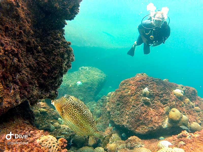 Fundo do mar - Mergulho em Ilhabela - Ilha Divers