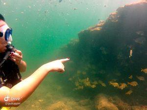 mergulho-em-ilhabela-ilha-divers
