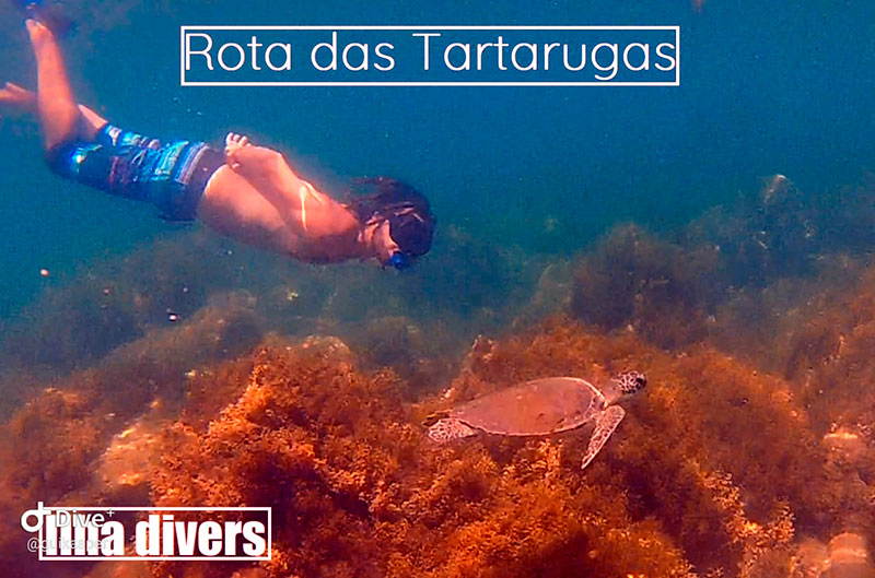 Passeio de barco Rota das Tartarugas - Ilhabela - Ilha Divers