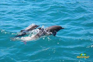 golfinhos-em-ilhabela-passeio-de-barco-maremar-turismo