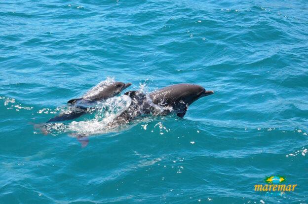 Golfinhos em Ilhabela - Passeio de barco - Maremar Turismo