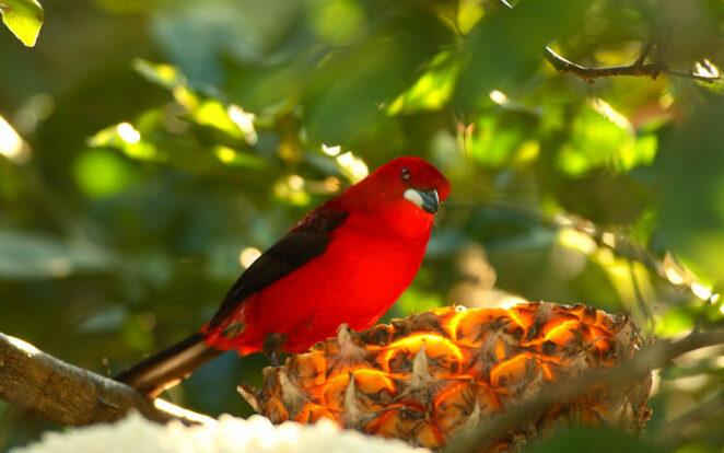 Birdwatching - Ilhasol Hotel Pousada - Ilhabela