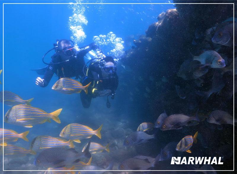 Narwhal Mergulho em Ilhabela - Fundo do mar