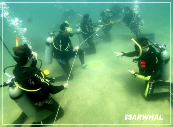 Narwhal Mergulho em Ilhabela - Instrutores e Alunos no Fundo do Mar