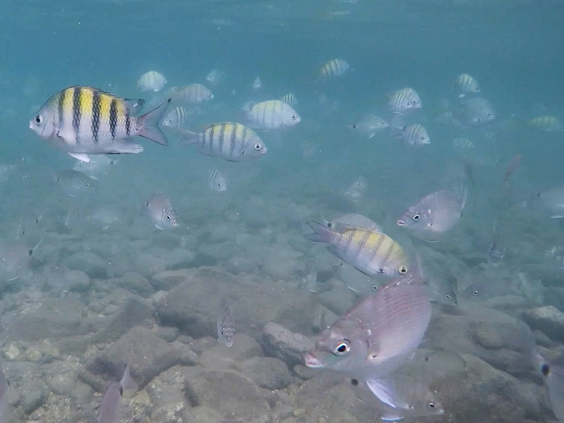 Peixes na Ilha das Cabras (Imagem: Arquivo Pessoal/Alessandra Stefani)