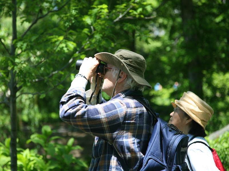 Birdwatching (foto: Daniel Schwen_wikimedia-commons) - Birdwatching Ilhabela