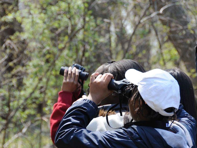 Birdwatching (foto: domínio público)