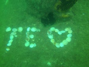 mergulho-em-ilhabela-ilhadivers02