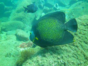 mergulho-em-ilhabela-ilhadivers04