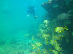 mergulho-em-ilhabela-ilhadivers10