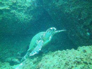 mergulho-em-ilhabela-ilhadivers14