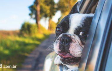 4 dicas para viajar com seu animal de estimação