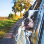 Dicas pra viajar com seu animal de estimação - Portal Ilhabela.com.br