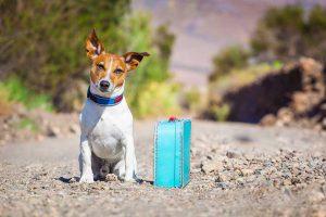 4 dicas para viajar com seu animal de estimação - Portal Ilhabela.com.br