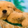 Hospedagem pet friendly em Ilhabela
