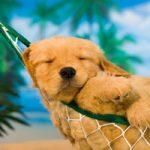 Hospedagem Pet Firendly em Ilhabela - Portal Ilhabela.com.br