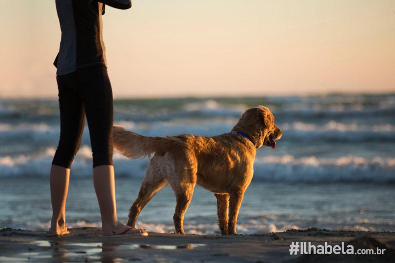 Orientações sobre cachorros na praia - Portal Ilhabela.com.br