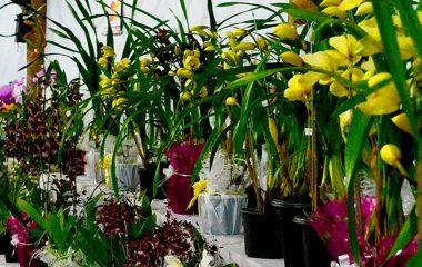 Dia das Mães em Ilhabela | Exposição de Orquídeas