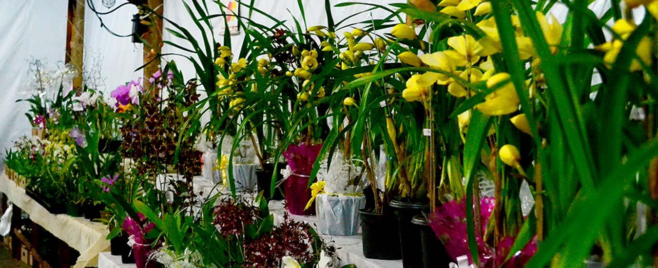 Dia das Mães em Ilhabela - Exposição de Orquídeas