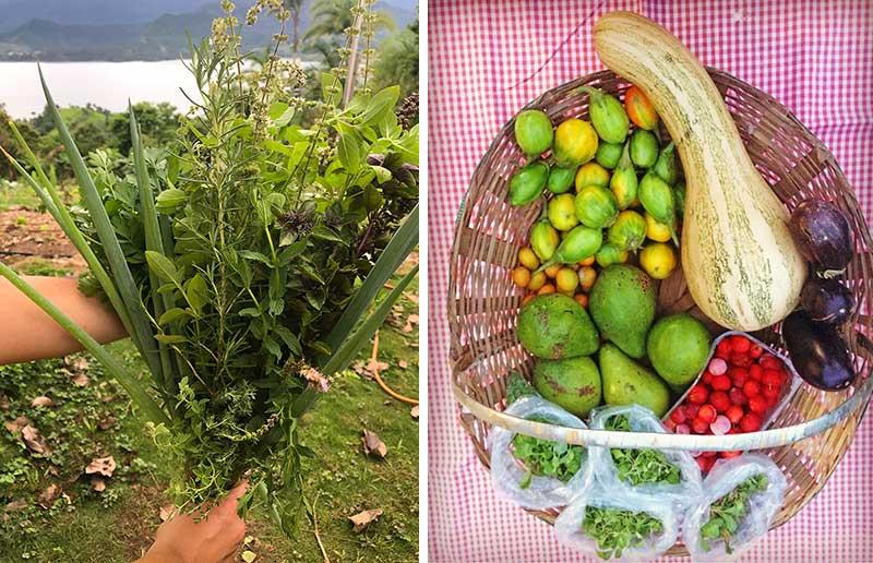 MUDA Alimentos Agroecológicos - Alimentação Saudável em Ilhabela