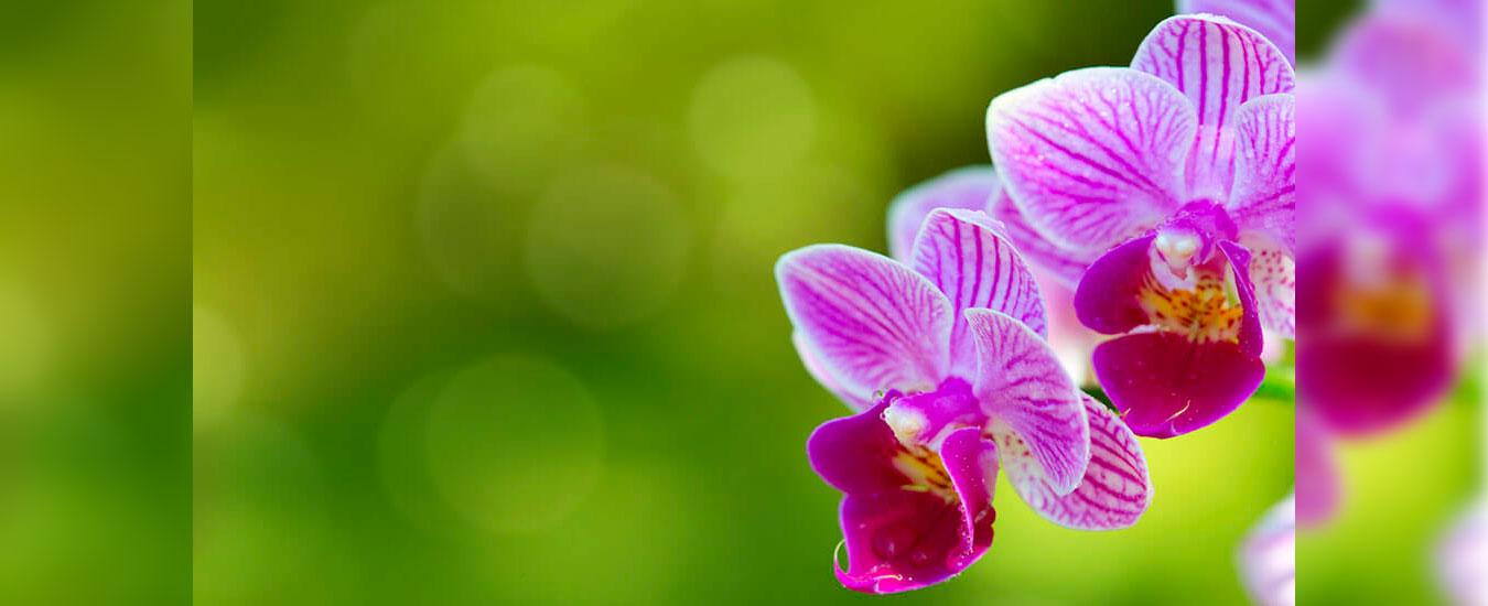 Exposição Orquídeas - Dia das Mães em Ilhabela