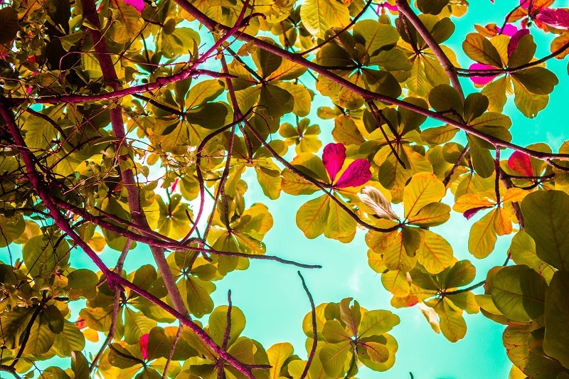 Natureza em Ilhabela - Shutterstock