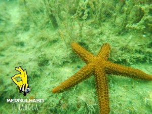 mergulhaso-estrela-do-mar-em-ilhabela