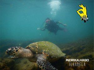 mergulhaso-tartaruga-ilhabela