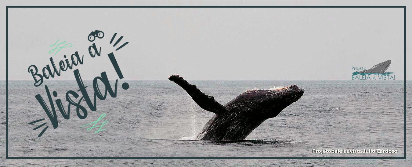 Projeto Baleia à Vista Ilhabela