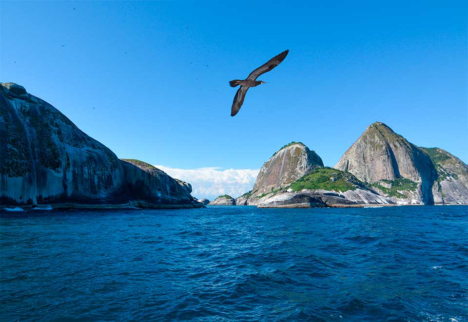 Arquipélago de Alcatrazes: novo ponto de mergulho e turismo náutico