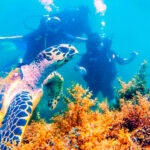 Ilha Divers - Operadora de Mergulho em Ilhabela