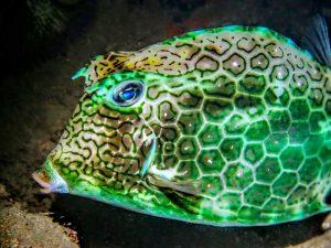 oceano-sub-atividades-subaquaticas-mergulho-ilhabela-02