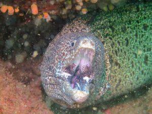oceano-sub-atividades-subaquaticas-mergulho-ilhabela-03