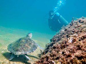 oceano-sub-atividades-subaquaticas-mergulho-ilhabela-05