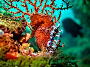 oceano-sub-atividades-subaquaticas-mergulho-ilhabela-09