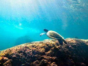oceano-sub-atividades-subaquaticas-mergulho-ilhabela-10