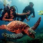 Oceano Sub Atividades Subaquáticas - Escola e Operadora de Mergulho