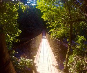 Pontos turísticos de Ilhabela - Trilhas - Ilhabela.com.br