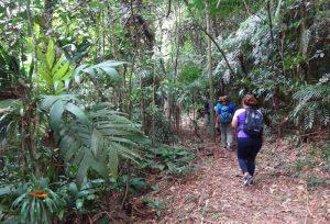 nilton-turismo-passeio-em-ilhabela-trilha