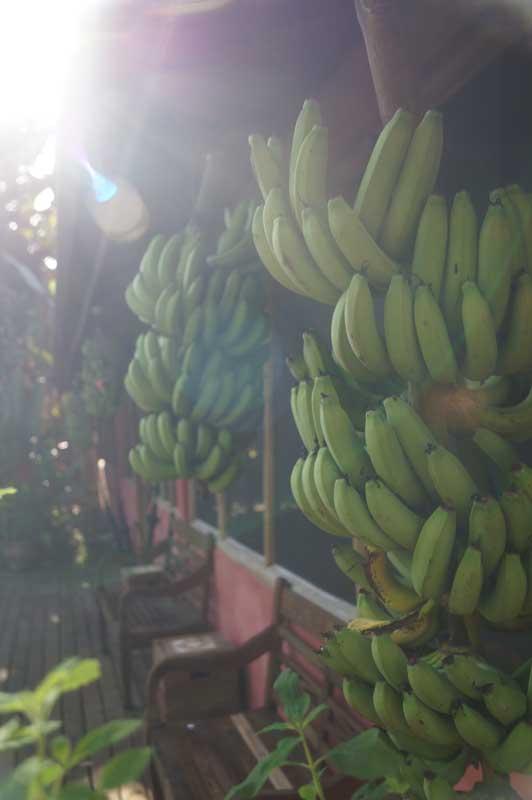 Banana Bamboo Ecolodge