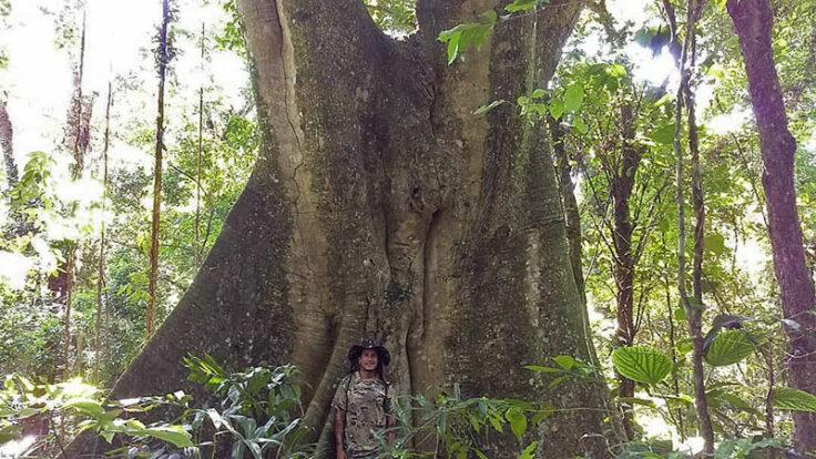 PH Off Trips - Guia de Ecoturismo em Ilhabela - Trilha para Árvore Centenária